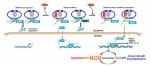 胡颖,生命学院,肿瘤 生命学院胡颖课题组在肿瘤细胞调控氧化应激机制研究领域取得重要进展 - 哈尔滨工业大学