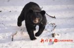 """看冰城动物咋过""""三九""""天 零下22℃多吃肉住地热 - 新浪黑龙江"""