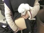 图为:女孩从假肚皮下拿出一只小狗 - 新浪黑龙江