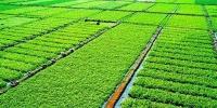 """哈市将推进""""三权分置""""试点 基本农田保护率将超80% - 新浪黑龙江"""