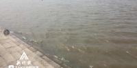 黑龙江18至20日有暴雨 入汛后全省平均降水同比增37.5% - 新浪黑龙江