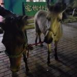 咋回事?昨天在哈尔滨松北区有人捡到两匹小马 - 新浪黑龙江
