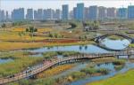 阳明滩大桥附近的松江湿地秋色迷人。本报记者苏强摄 - 新浪黑龙江