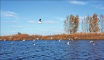 哈东沿江湿地自然保护区宜人美景。 吴志伟摄 - 新浪黑龙江