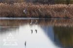 咱也有滇池盛景 冰城初冬上演人鸥共处美景 - 新浪黑龙江