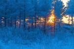暴雪橙色预警!黑龙江大雪降温5级风道路结冰全面来袭 - 新浪黑龙江