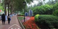 一串红、万寿菊、四季海棠 今夏62种花卉冰城街头绽放 - 新浪黑龙江