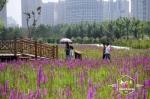 丁香公园水域内新栽植睡莲、荷花近千株。 - 新浪黑龙江