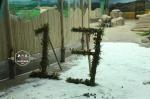 """亚布力8月下雪?原是""""猫粉""""在给熊猫宝宝过生日 - 新浪黑龙江"""