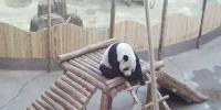 亚布力熊猫馆。资料图 - 新浪黑龙江