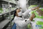 疫情 新华社《习近平总书记关切事》报道我校就业工作 - 哈尔滨工业大学